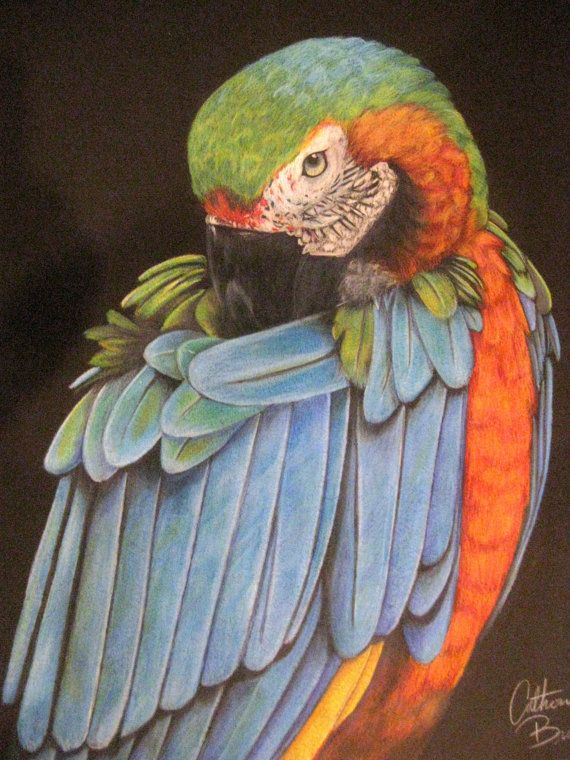 Prismacolor  Pencil Drawing Macaw Parrot by CatherineBradlyArts, $450.00 on Etsy #art #drawing