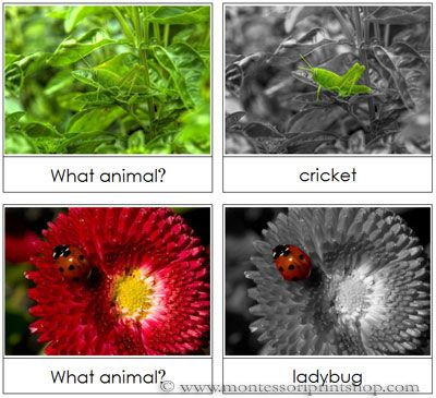 Animal Camouflage Cards Set 1 - Printable Montessori Science and Animal Materials for Montessori Learning at home and school.