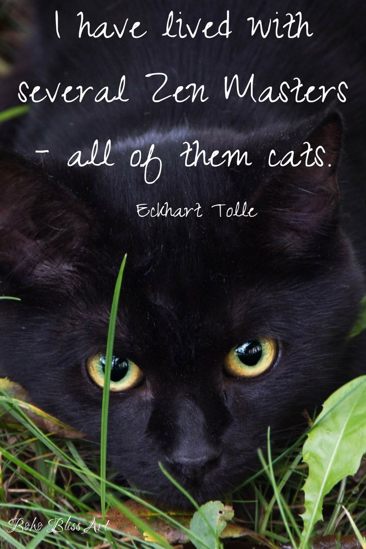 Purrfectly Pawsitive 50 Cat Quotes Babies Cat Quotes Cats Cat