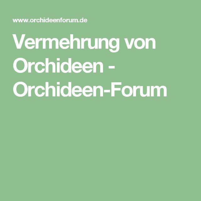Vermehrung von Orchideen - Orchideen-Forum