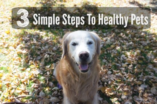 3 Simple Steps to Healthy Pets @goldenwoofs