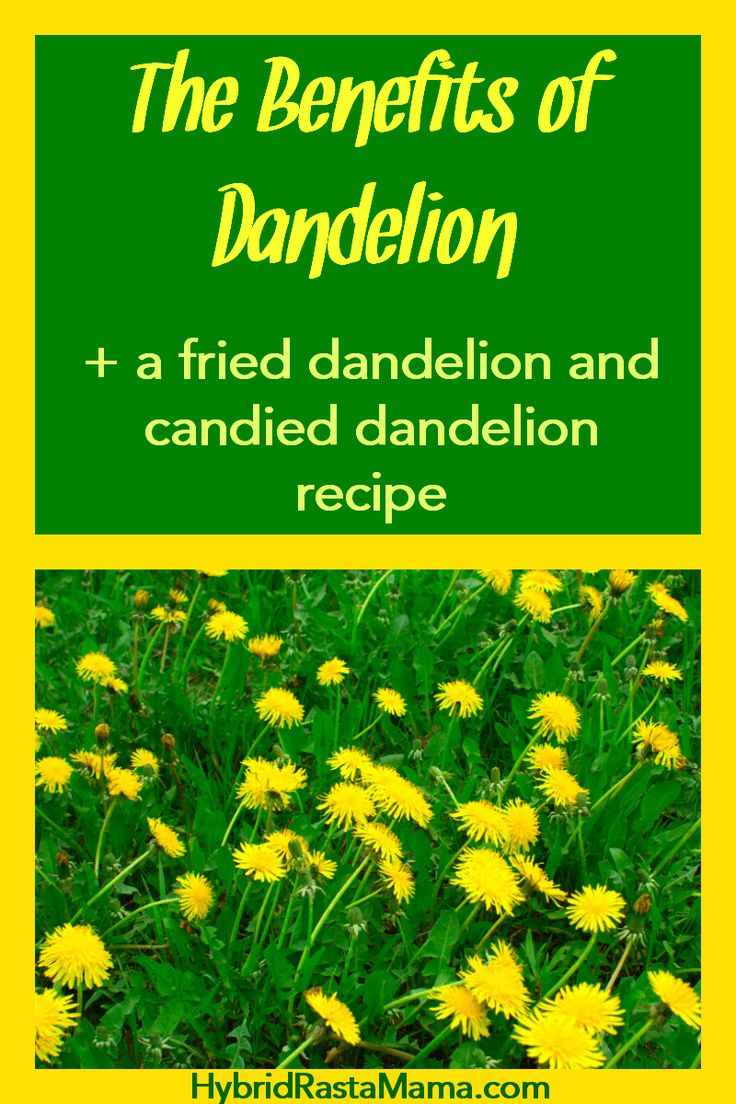 Did You Know That Dandelion Flowers And Dandelion Greens Both Have Some Awesome Benefits They Are Delicious And Can Be Prepared So Many Way