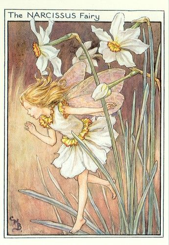 Narcissus Flower Fairies