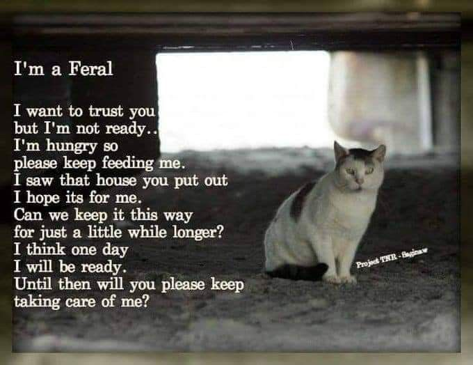 Pin By April Poirier On Here Kitty Kitty Feral Cats