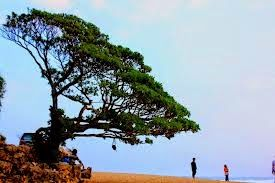 Jogja Java Transport: Pantai Pok Tunggal