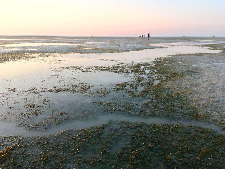 #Dugong feeding trail seen while #seagrass monitoring last weekend at #lowtide in #RoebuckBay #Broome #WesternAustralia #BroomeSeagrass🌱🌱🌱👍