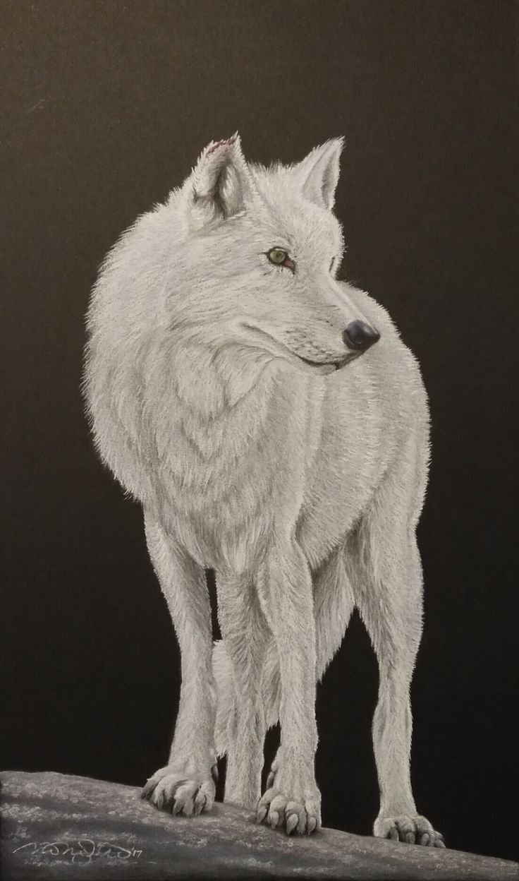 """King of the Hill"" White pencil and Pastel on black Cansen Board"