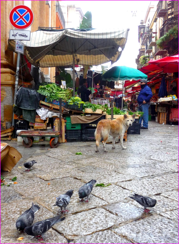 Palermo. Mercato al Capo. Via Porta Carini.
