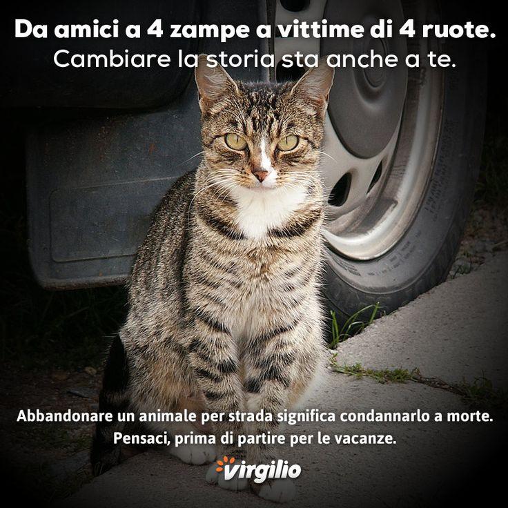 Campagna 2014 contro l'abbandono degli animali. Realizzata per Virgilio.it. Un gatto ci ricorda come la strada può diventare una condanna a morte.