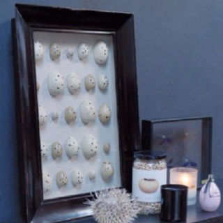 Great way to keep shells!