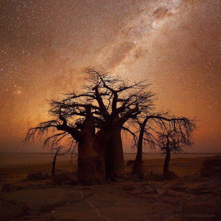 Milkyway over the Boabab Trees