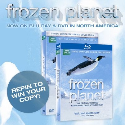 Want to win a copy of Frozen Planet? Repin to win! #FrozenPlanet #FrozenPlanetDVD 'Frozen Planet': Planets, Announced Monday, Frozenplanet Frozenplanetdvd, Frozenplanetdvd Frozen, Rap, Win, Copy