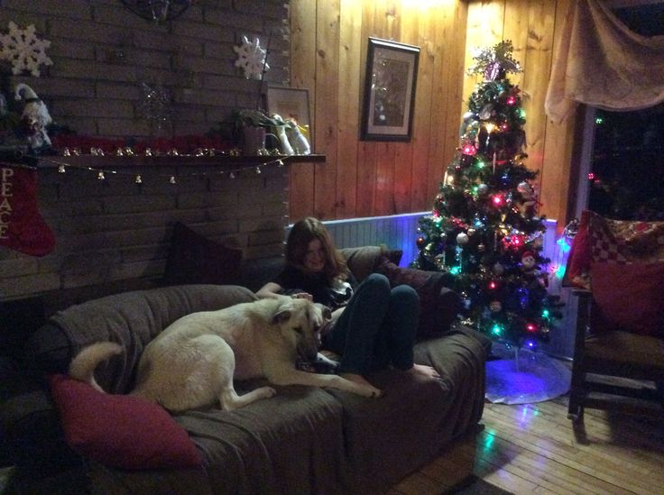 Dahlia the livestock guardian dog (LGD) comes in for a few hours of family time after the sheep are in the barn...hanging with Enid.