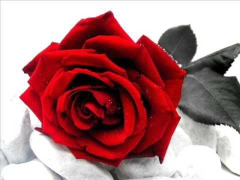 Eccezionale Oltre 25 fantastiche idee su Rose rosse su Pinterest | Rosso, Rose  UQ54