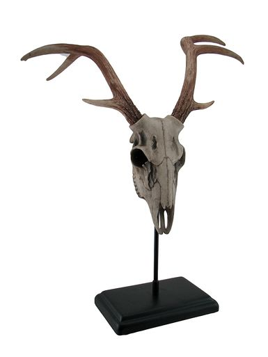 Buck Deer Skull Statue On Black Museum Mount