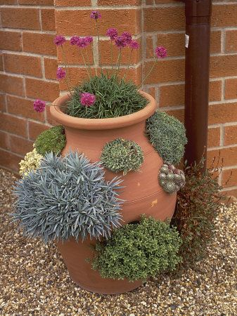 Great second life for a terracotta strawberry planter! Fill it with sempervivums!