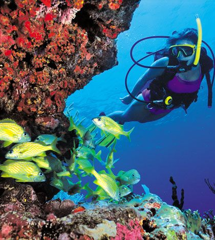 10 Best Scuba Diving Destinations in the US That You Shouldn't Miss