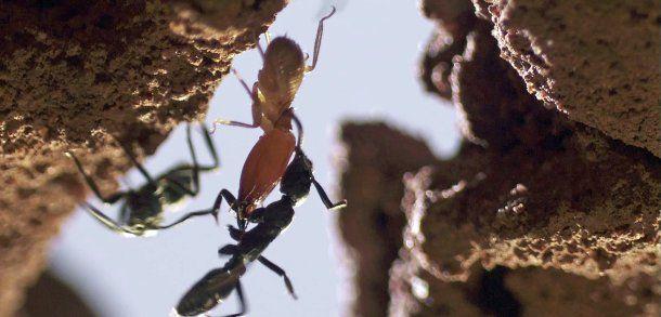 """+++ Der Film zum Wochenende +++: """"Micropolis - Kampf der Giganten"""""""