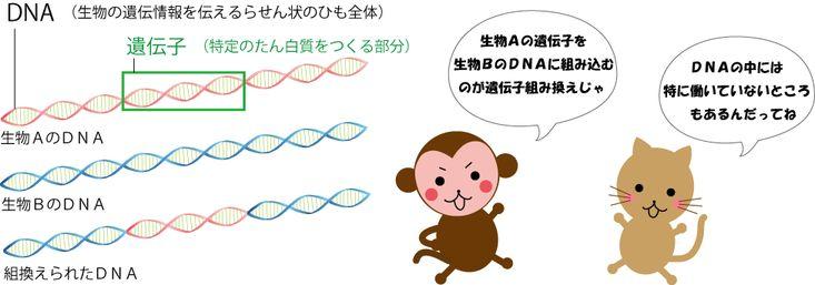 GM(遺伝子組み換え)の基礎知識 - http://gmo.luna-organic.org/?page_id=18