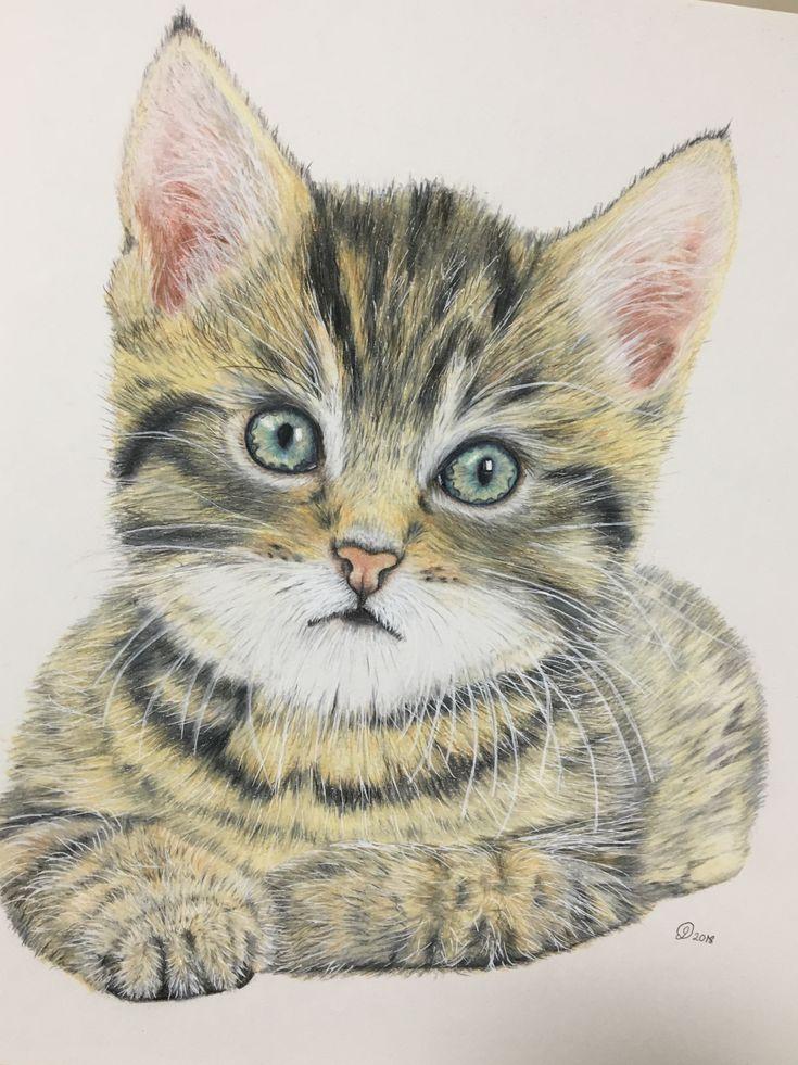 Kitten by Janine Lees Art (2018). Coloured Pencil Portrait.
