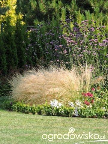 Zielonej ogrodniczki marzenie o zielonym ogrodzie - strona 817 - Forum ogrodnicze - Ogrodowisko