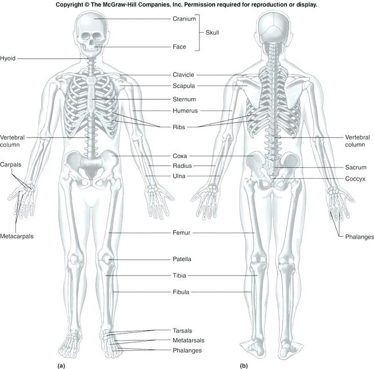 anatomy and physiology printable worksheets coloring ...