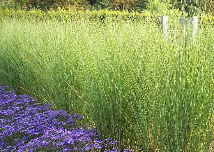 82 best images about patio ideas on pinterest garden for Tall ornamental grasses that grow in shade