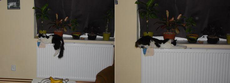 Teploučko na radiátoru