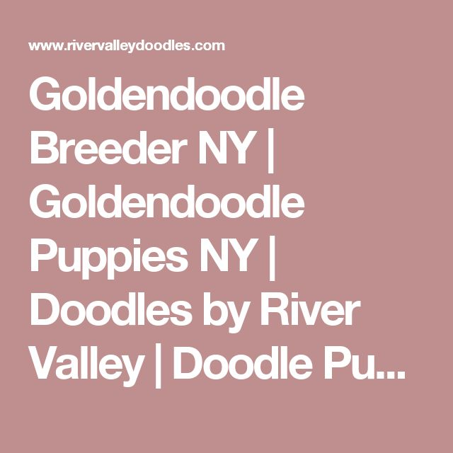 Goldendoodle Breeder NY | Goldendoodle Puppies NY | Doodles by River Valley | Doodle Puppies - River Valley Goldendoodles Puppy breeder in NY near PA near NYC