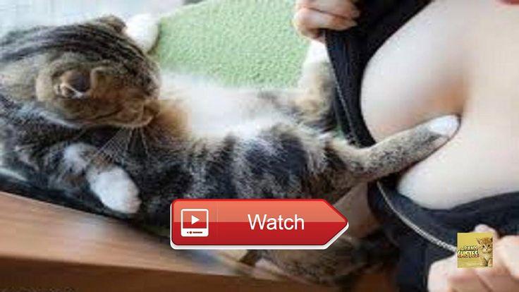 Videos Graciosos Perros y Gatos Chistosos  Videos Graciosos Perros y Gatos Chistosos Hola amigos de YouTube hoy un video ms para matarse de la risa veras  on Pet Lovers