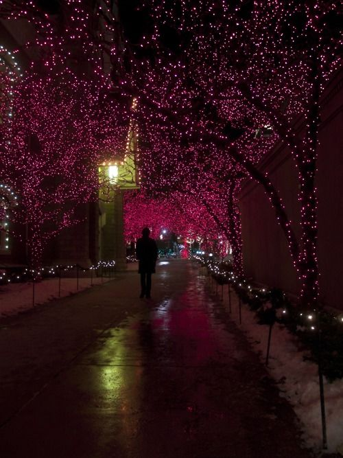 beautiful: Purple Lights, Night Lights, Christmas Lights, Color Maroon Burgundy Wine Etc, Fairy Lights, Pink, Beautiful Lights, Sparkly Lights