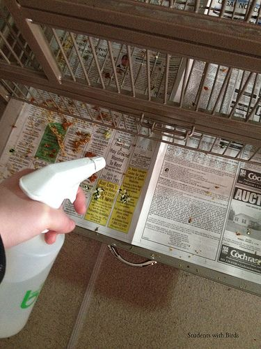 Lightly spray tray liner with water before clean up to prevent flying debris and feathers