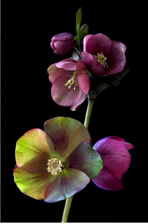 No se que flor será, pero esta tan bella que no pude resistirme en añadirla!