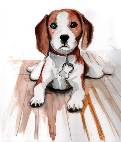 Drawing of a beagle