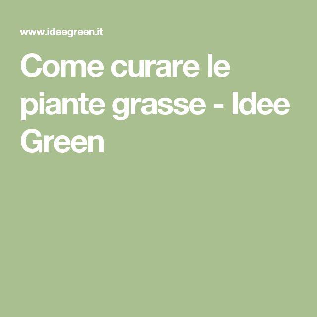 Come curare le piante grasse - Idee Green