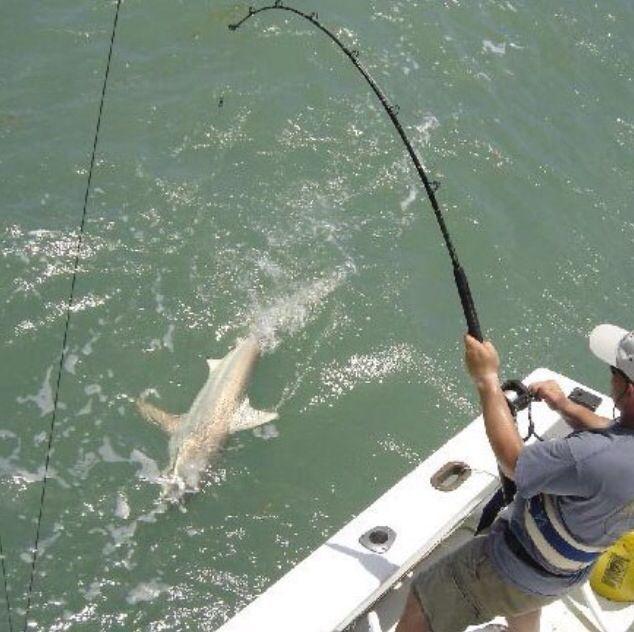 Deep sea shark fishing for Alaska deep sea fishing