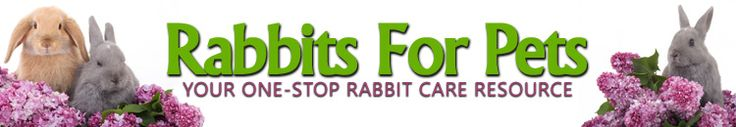 Toys For Rabbits - 15 Cheap Rabbit Toys You Can Make At Home