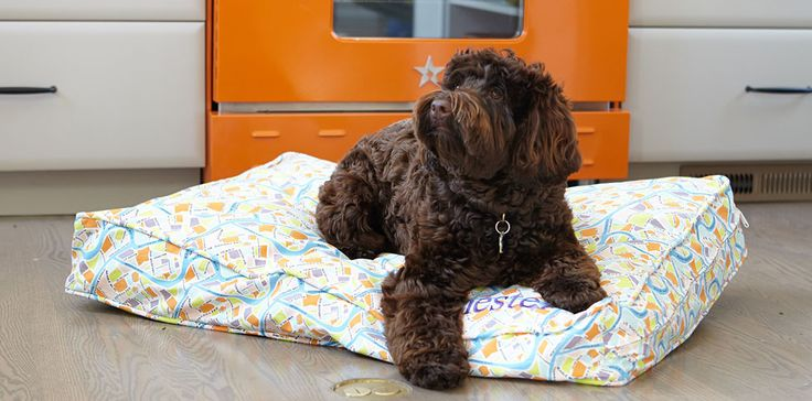 Molly Mutt: We make the dog bed dogs love. choose from over 25 designs across our duvets, crate covers and pillow packs to build your dog's perfect setup — we'll include a free stuff sack.