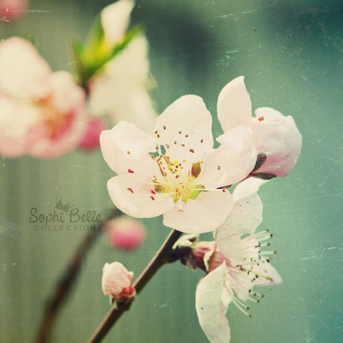 Spring Rhapsody II  by =Berryness