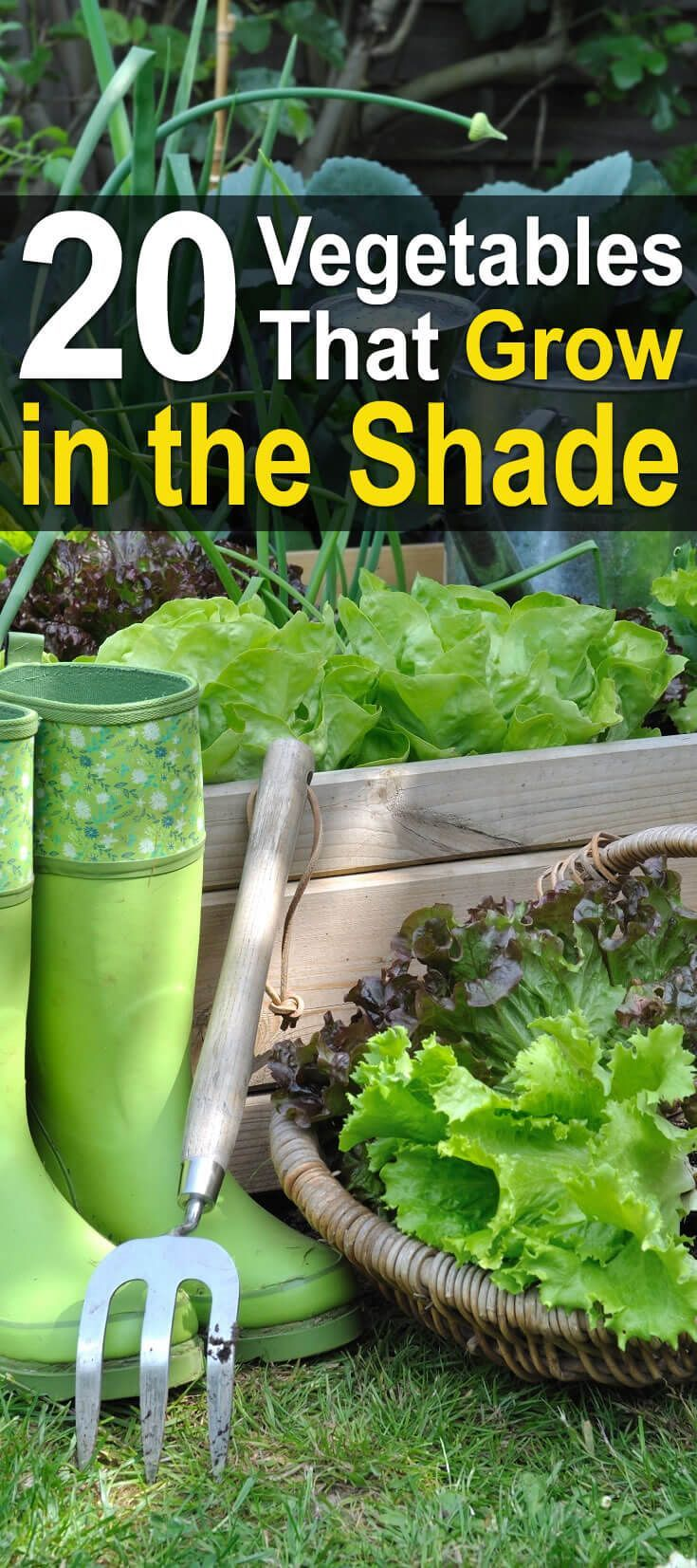 If you can find a way to get 3 or 4 hours of sunlight in one area, you can plant a wide variety of vegetables that only need a few hours of sunlight a day.