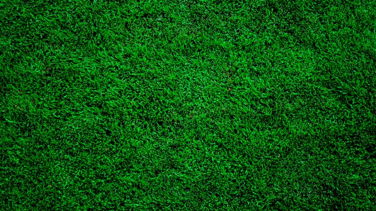 Wallpapers For Gt Dark Green Grass Background Flowers And