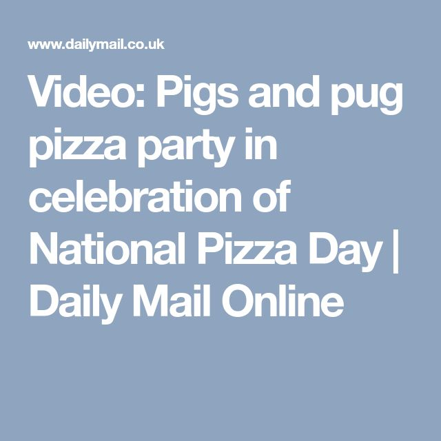 Video: Pigs and pug pizza party in celebration of National Pizza Day | Daily Mail Online