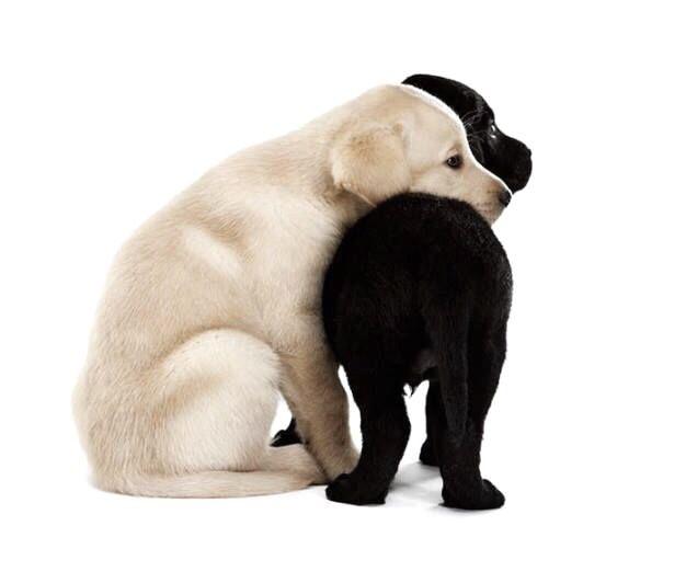 puppy friends
