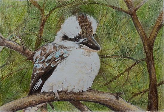Cheeky Kookaburra by Jacqui Coote