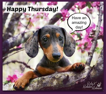 Happy Thursday Pictures, Images, Photos for Facebook, Pinterest ...