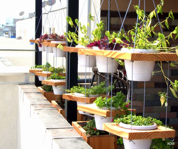 Floating Pots - A wonderful way to showcase your drooping or hanging plants in white pots on Pine wood Slabs hung on PVC coated cables with adjustable heights and options of multiple levels.