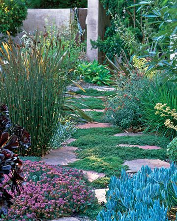 Find This Pin And More On Arizona Gardening By Maggiepi508.