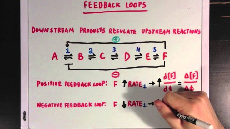 Allosteric Regulation and Feedback Loops