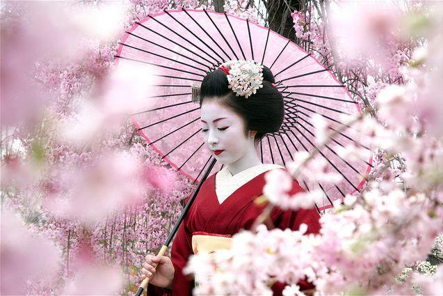 "geisha-licious: Kimika among ""pink clouds"""