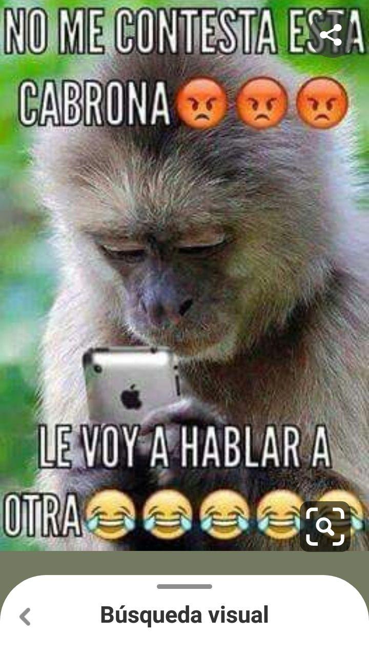 Pin By Maria Liz Vazquez On Mensajes Funny Animal Jokes Monkeys Funny Funny Spanish Memes